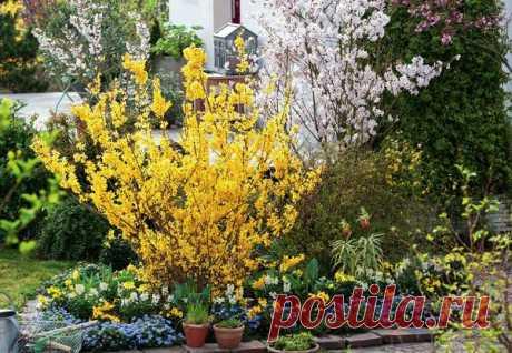 Декоративные деревья и кустарники, цветущие весной