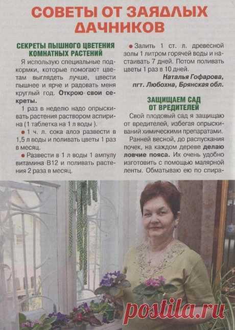 Советы огороднику.