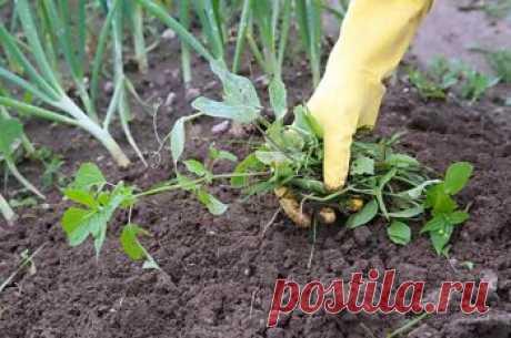 Как по сорнякам определить почву для посадки растений   Дача - впрок