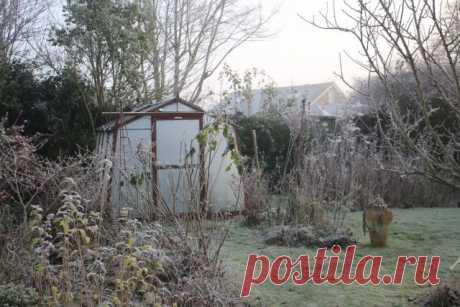 Тёплая зима — чем грозит садоводу? Фото — Ботаничка.ru