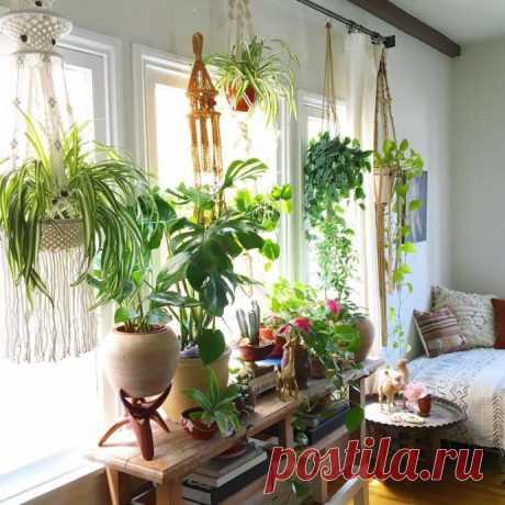 Как привлечь в дом счатье, достаток и любовь с помощью домашних растений