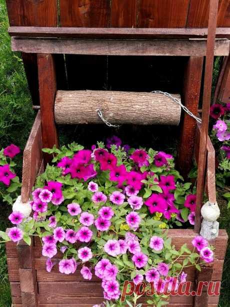 Экскурсия в сад мечты | Цветочное хозяйство | Яндекс Дзен