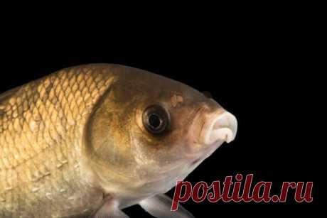 Самая старая рыба в мире дожила до 112 лет Недавно, в водах американского штата Южная Дакота, была найдена 112-летняя рыба. По расчетам ученых, она родилась в 1907 году, когда пароход «Титаник» еще