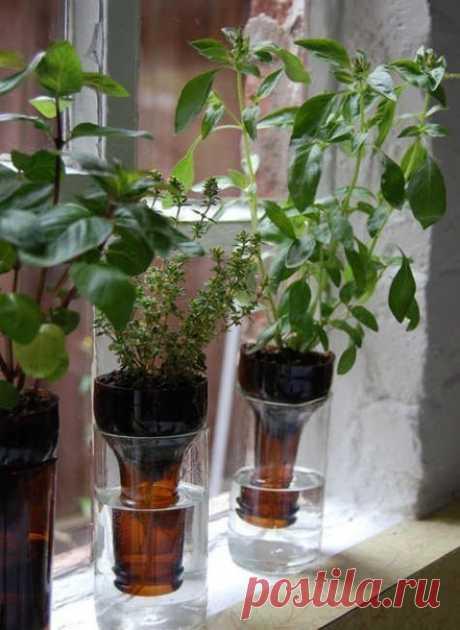 Бутылочный сад. Интересная идея.
