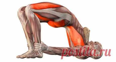 Тренировка мышц малого таза – СУПЕР упражнения для женщин