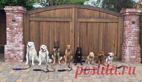 El habitante de California que trabaja vygulschikom de los perros, ha tenido fama gracias a las fotografías de los tutelados, que muestran la firmeza simplemente ideal - Viajamos juntos