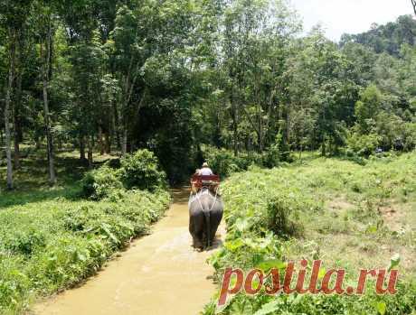 Обязательная часть экскурсии катание на слонах