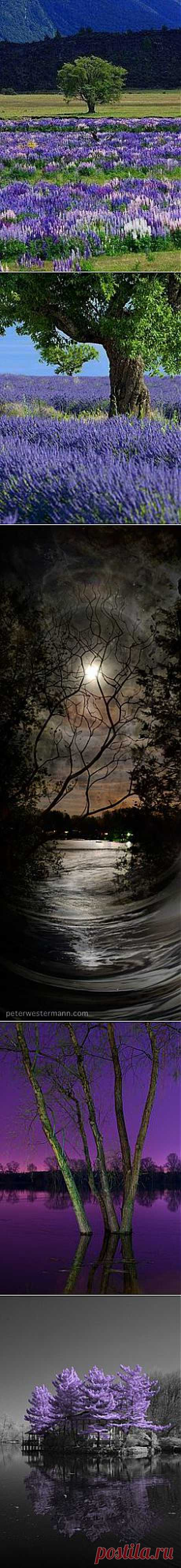 *Nature's Beauty в Pinterest