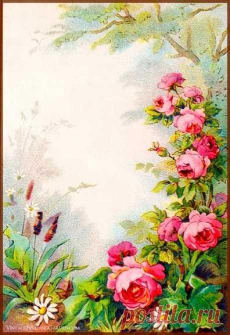 Цветочные рамки для вашего творчества