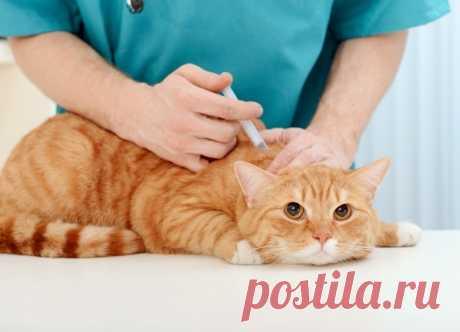 Какие прививки обязательны даже для домашних кошек и как часто нужно делать ревакцинацию.