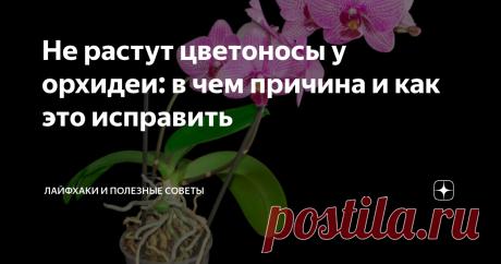 Не растут цветоносы у орхидеи: в чем причина и как это исправить Рассказываем про самые распространенные причины отсутствия бутонов у орхидеи. Способы решения проблемы.