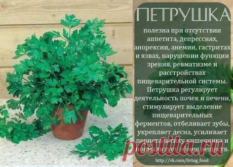 полезные травы