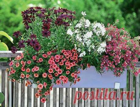 Цветники в контейнерах: схемы высадки растений, фото