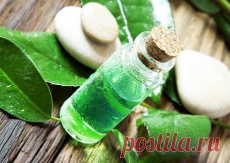 Эффективное лечение маслом чайного дерева. От каких болезней помогает масло чайного дерева?