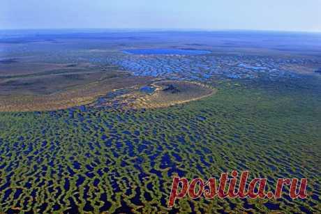 Васюганские болота – это очень интересный природный феномен, который отличается разнообразием ландшафтов. В 2007 году они вошли в предварительный список объектов наследия ЮНЕСКО в России.