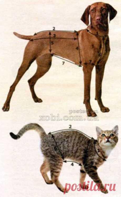 как снять мерки с собак и кошек