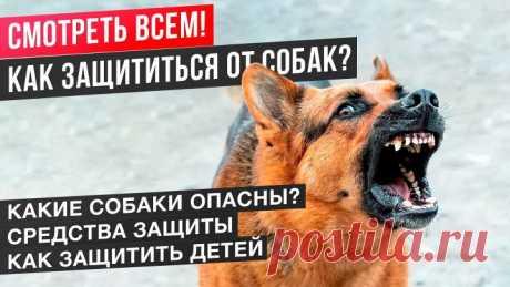 Как защититься от нападения любой собаки? Подробная инструкция