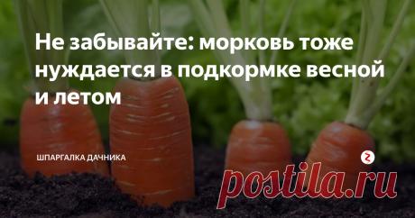 Не забывайте: морковь тоже нуждается в подкормке весной и летом Подкормка моркови во время роста и созревания — важное мероприятие, которое нельзя игнорировать. Ведь это залог отличного вкуса. Каждый дачник хочет вырастить на своем участке вкусную и сладкую морковь. Сладкий вкус и твердость корнеплода зависят от содержания фосфора, содержание каротина увеличивает азот, калий повышает иммунитет и устойчивость к болезням, а бор укрепляет плод. Я часто для подкор
