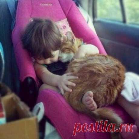 Дети и домашние животные: фото, как влияют животные на детей и их развитие