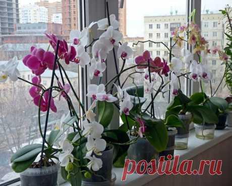 Ваша орхидея зацвела? Узнайте 5 главных правил ухода для длительного цветения — Садоводка