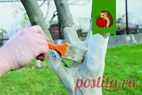 5 ошибок в побелке деревьев: что сделает процедуру бесполезной, а то и вовсе вредной для деревьев? | садоёж | Яндекс Дзен