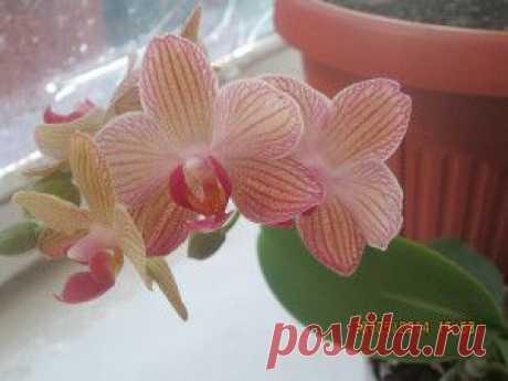 Правила пересадки мини орхидей | Комнатные цветы
