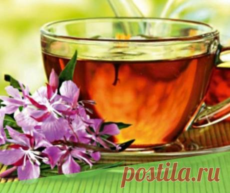 Иван-чай ферментировать в домашних условиях - Самое прекрасное на земле - это жизнь!