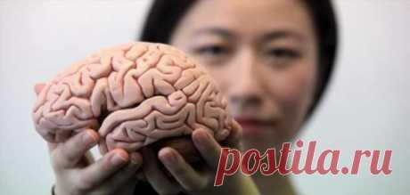 Раскрыты три простых ключа к здоровью головного мозга | Офигенная