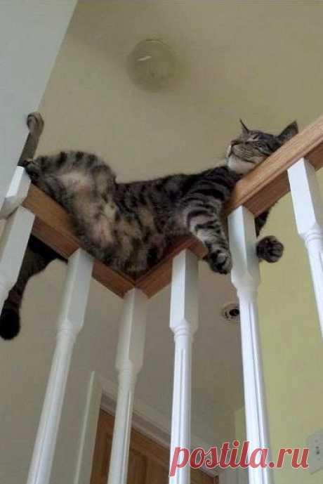 Потому что котам пофиг, где спать. Главное - спать.