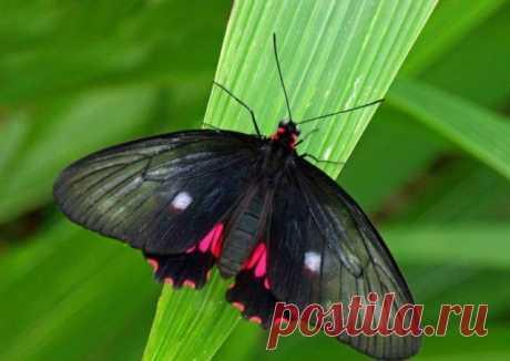 Красивые бабочки с разных уголков мира (40 фото) - Фото животных - насекомые, бабочки