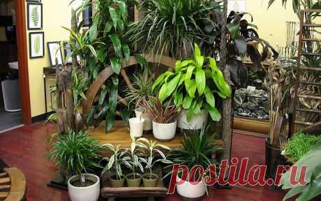 """ХОТИТЕ РОСКОШНЫЙ ЦВЕТНИК В КВАРТИРЕ? ТОГДА ЗАПОМИНАЙТЕ СЕКРЕТИКИ. Секрет роскошного комнатного цветника прост: растения нужно хорошо подкармливать, иначе не дождаться ни пышной листвы, ни хорошего цветения. Жесткая """"диета"""", когда растение длительное время испытывает нехватку питательных веществ, обычно приводит к заболеванию – ведь сил для сопротивления у растения нет. Но как правильно составить меню для зеленых питомцев, учитывая их разные вкусы? 1. Практически все растен..."""