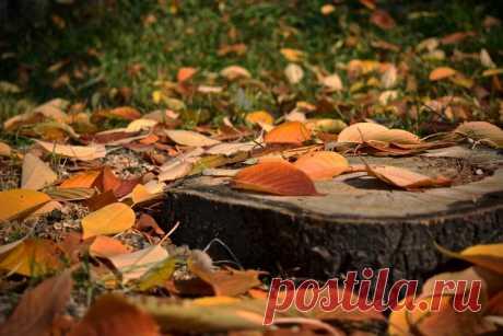 За или против уборки листьев осенью   Идеальный сад   Яндекс Дзен