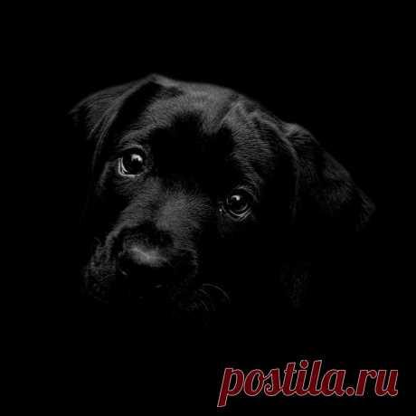 unnamed.jpg (Изображение JPEG, 900×900 пикселов) - Масштабированное (98%)