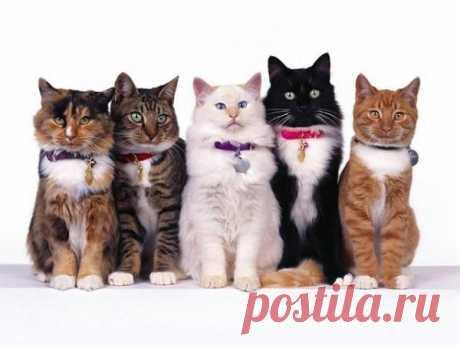 Коты, кошки и котята… В ошейнике или без? | Я- Милочка