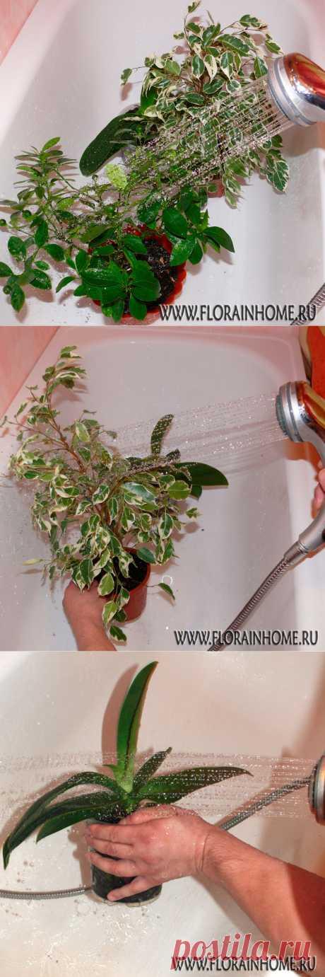 Горячий душ для растений | Flora In Home