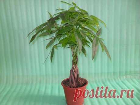 Les plantes d'intérieur les plus simples et tenaces