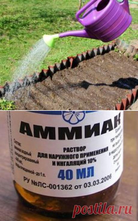 El hidrato de amonio en el jardín y la huerta