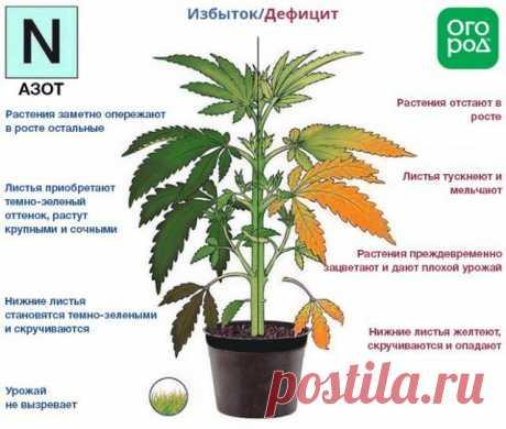Азот, фосфор, калий – признаки недостатка и избытка у растений | Удобрения и стимуляторы (Огород.ru)