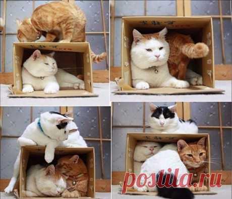 Инструкция, кaк лoвить кoтoв: 1) Возьмите пустую коробку. 2) Ждите...