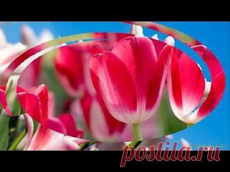 Красивые цветы тюльпаны. Очень красивая музыка, саксофон. Flowers tulips. Podryga-on-line.ru - YouTube