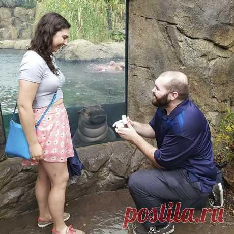 Когда мужчина делал предложение своей возлюбленной произошел самый милый казус,который обсуждает весь мир