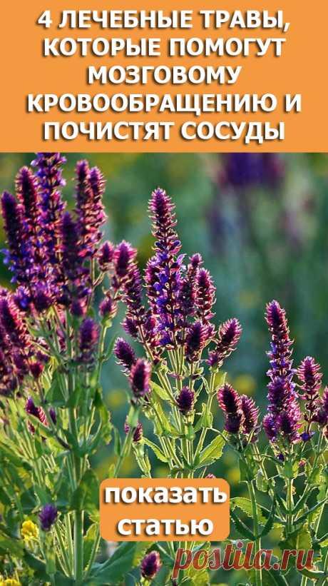 СМОТРИТЕ: 4 лечебные травы, которые помогут мозговому кровообращению и почистят сосуды.