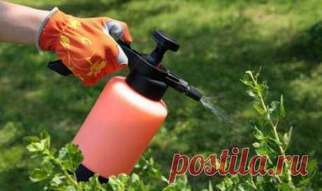 Весенняя обработка сада от болезней и вредителей: схема действий