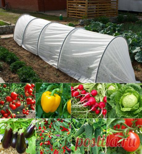 Теплица урожайная из агроволокна от производителя недорого | распродажа | Размеры 4м. 6м. 8м. | Что-Где-Купить?