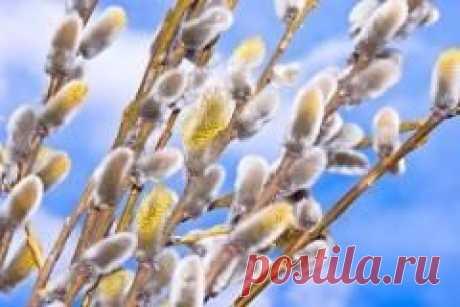 """Сегодня 24 апреля отмечается """"Вход Господень в Иерусалим (Вербное Воскресенье)"""""""