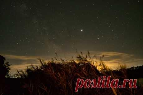 «Ночь в свете Юпитера» Порой также хочется оказаться под звёздным небом, отдыхая среди камышей! Автор кадра – Владимир Гудиев: Волшебных снов.