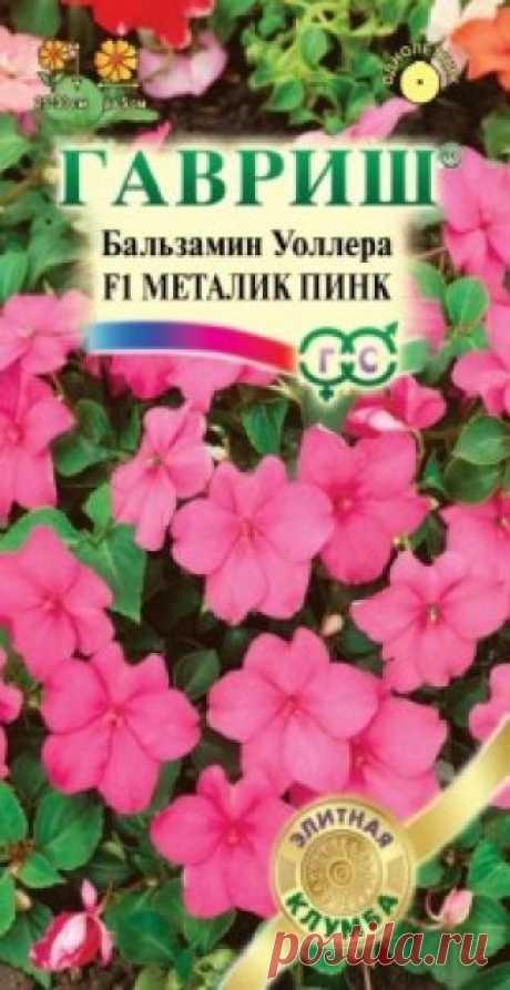 """Семена. Бальзамин Уоллера """"Карнавал Металик Пинк F1"""" (5 штук) Всхожесть: 99%. Компактный куст высотой 25-30 см, диаметром 25-30 см. Цветки насыщенно розовые, диаметром 5 см. Хорошо растет в полутени. Обильно цветет. Влаголюбив, но не переносит переувлажнения. Для клумб, кашпо и цветников. Можно выращивать как комнатное растение."""