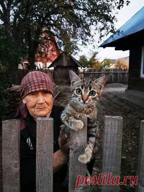 """Старушка кота отдавала, С условием - в добрые руки: """"Осталось мне жить уже мало, Кто будет кормить? Он от скуки,  Играть будет, ласковый очень, Мне с Васенькой так повезло, Уже холодает и осень, Хотела пристроить в тепло!""""  Но """"добрые руки"""" шли мимо, И ей не словечка, ни взгляда, Одна ей сказала:"""" Как мило!"""" Другая:"""" И даром не надо!""""  Старушка кота отдавала: """"Никто не берет, как же быть?"""" Все крепче кота прижимала: """" Ну что же, придется пожить!""""  Когда в жизни есть нашей ..."""