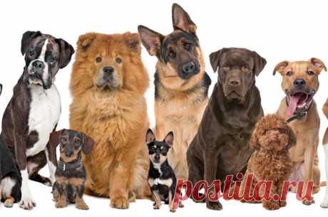 Чому собаки поводяться по-різному: дослідження