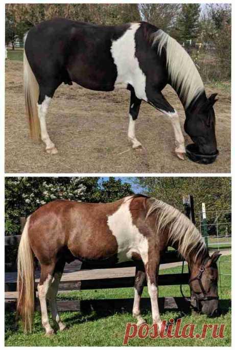 Девушка показала своего коня зимой и летом. Он – хамелеон